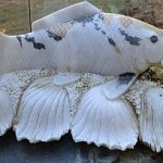 carved-marble-koi-fish-sculpture